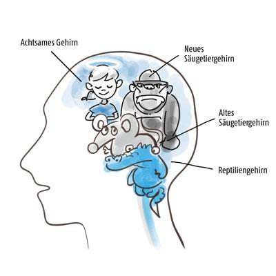 Das entwickelte Gehirn